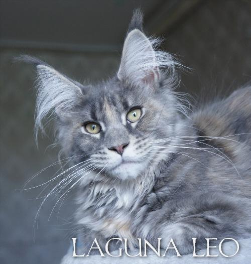 Arisha Laguna Leo