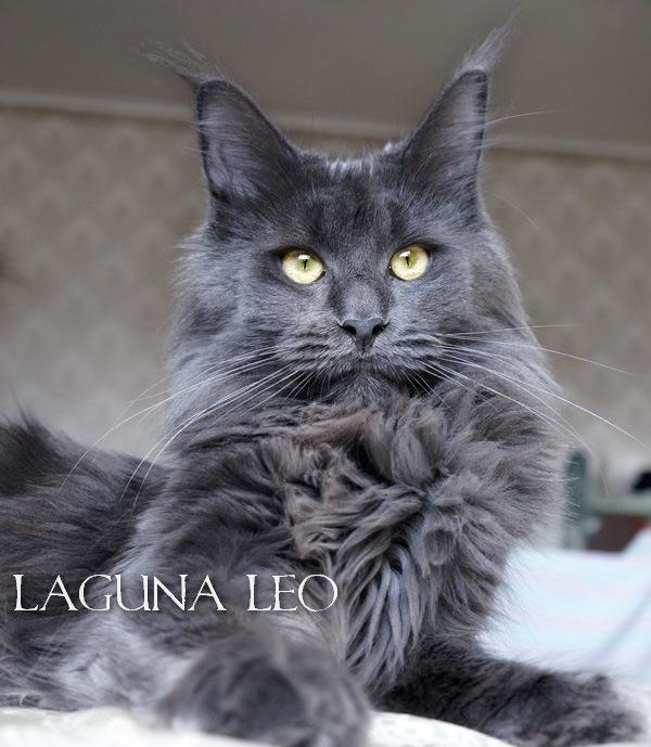 Катерина laguna-leo.ru