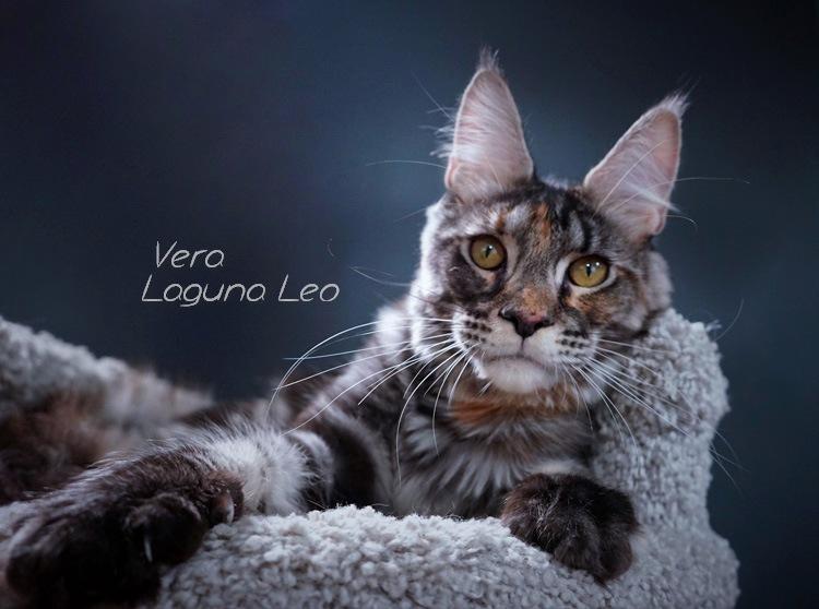 Laguna Leo