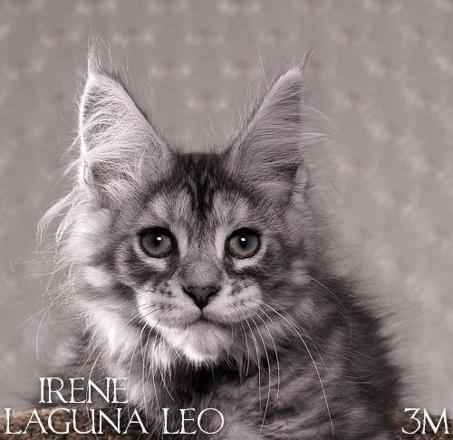 Irene Laguna Leo