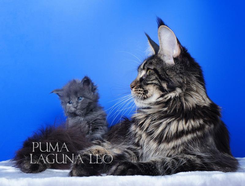 Puma Laguna Leo