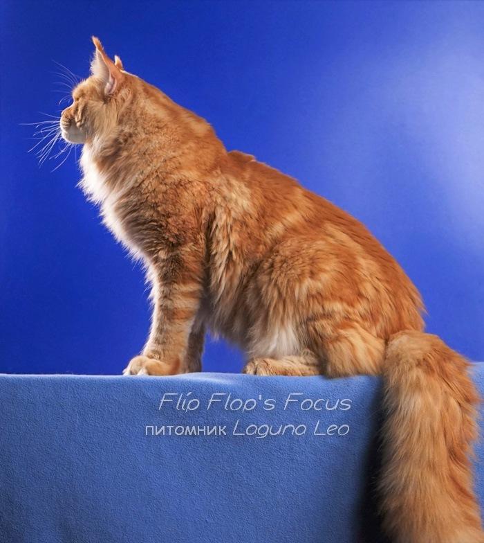 FLIP-FLOP'S FOCUS