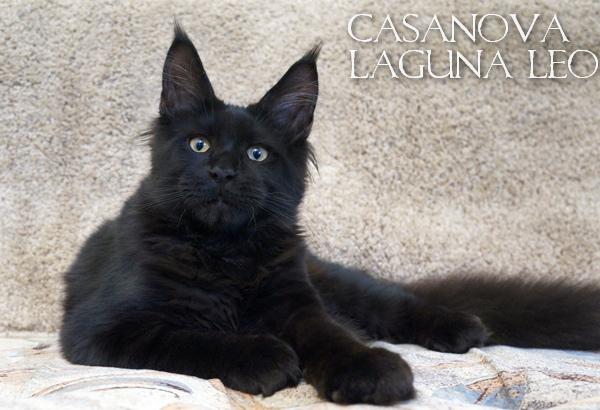 Casanova Laguna Leo