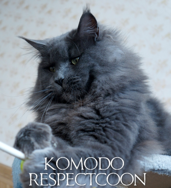 RESPECTCOON KOMODO