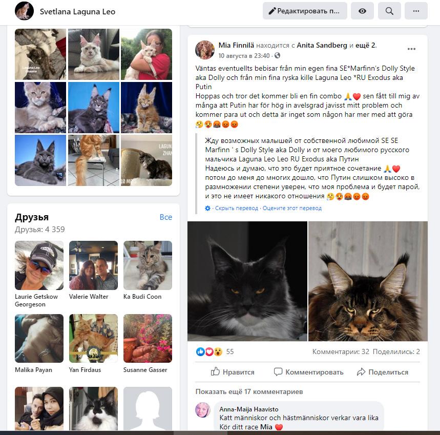 Отзывы о питомнике кошек породы мейн кун LagunaLeo
