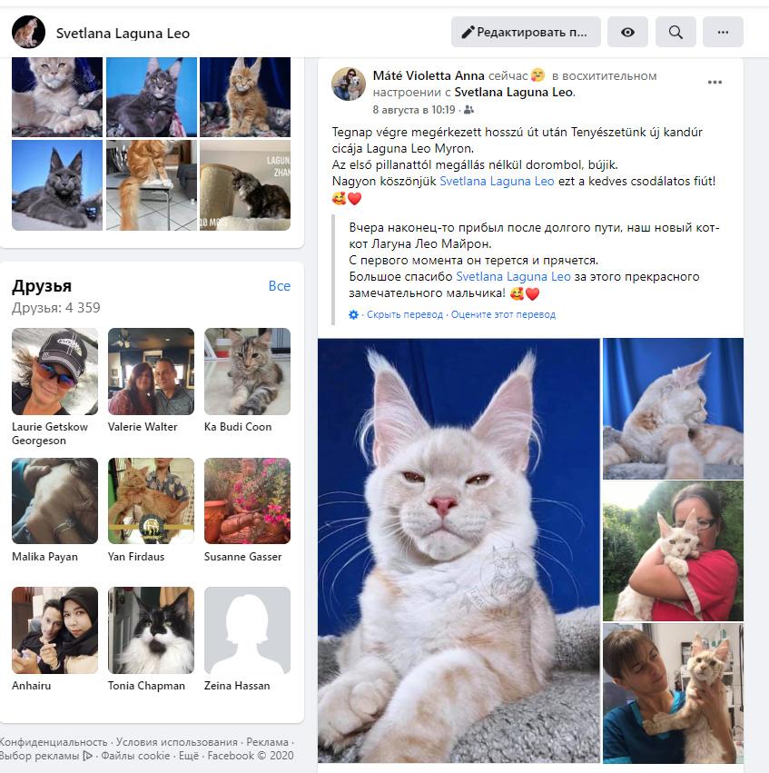 Отзывы о питомнике кошек Laguna Leo